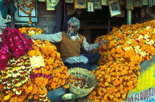 Marigold-seller
